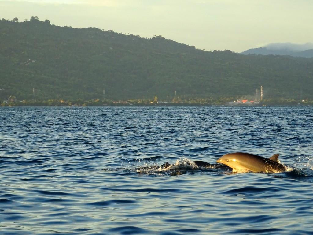 Vyfotit skákajícího delfína, když nevíte, kde se vynoří, není žádná sranda! :) © Filip Altman