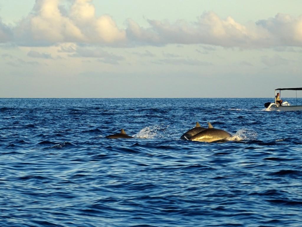 Klidná hladina na severním pobřeží umožňuje výlet i slabším žaludkům © Filip Altman