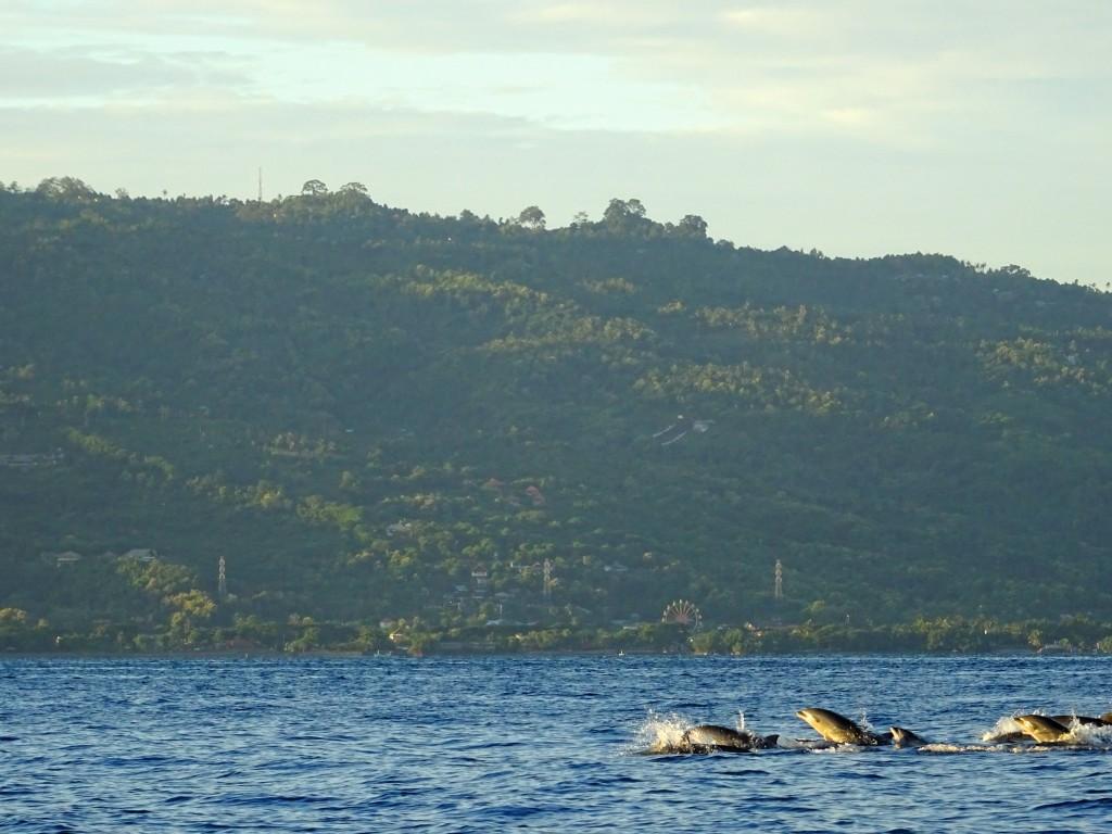 Na pohled delfíni nejsou daleko od břehu © Filip Altman