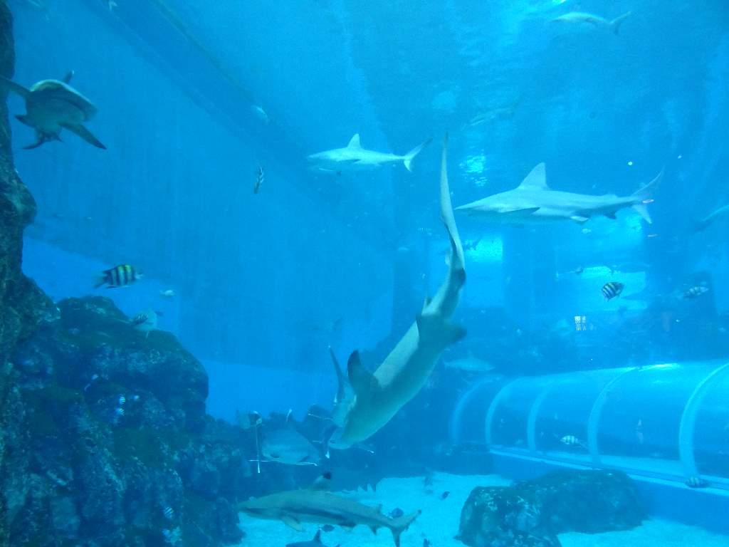 S.E.A. Aquarium, Sentosa Island